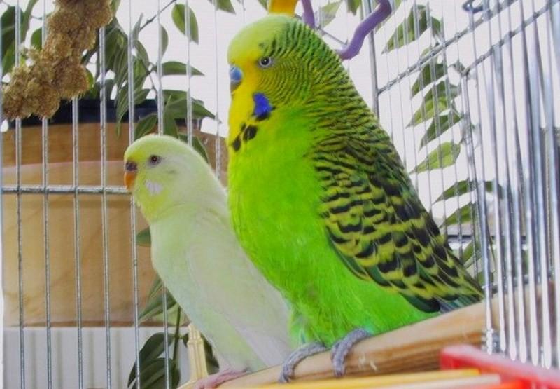 birds002