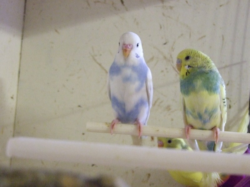 birds006