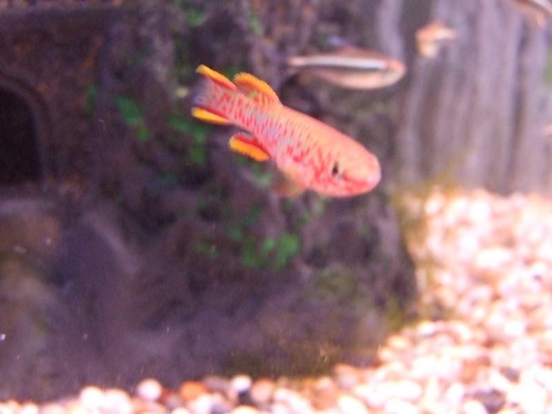 fish013