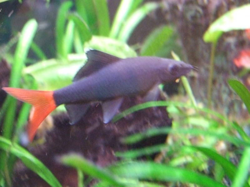 fish017