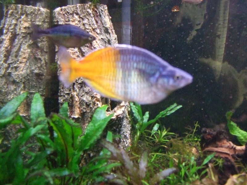 fish018