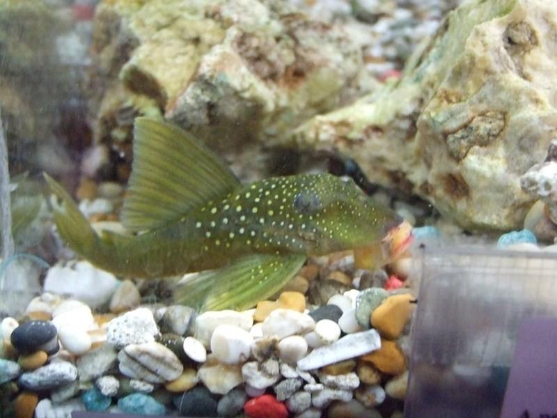 fish033