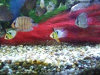 fish038