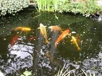 fish040