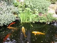 fish041