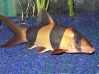 fish045