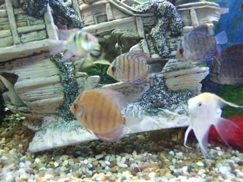fish054