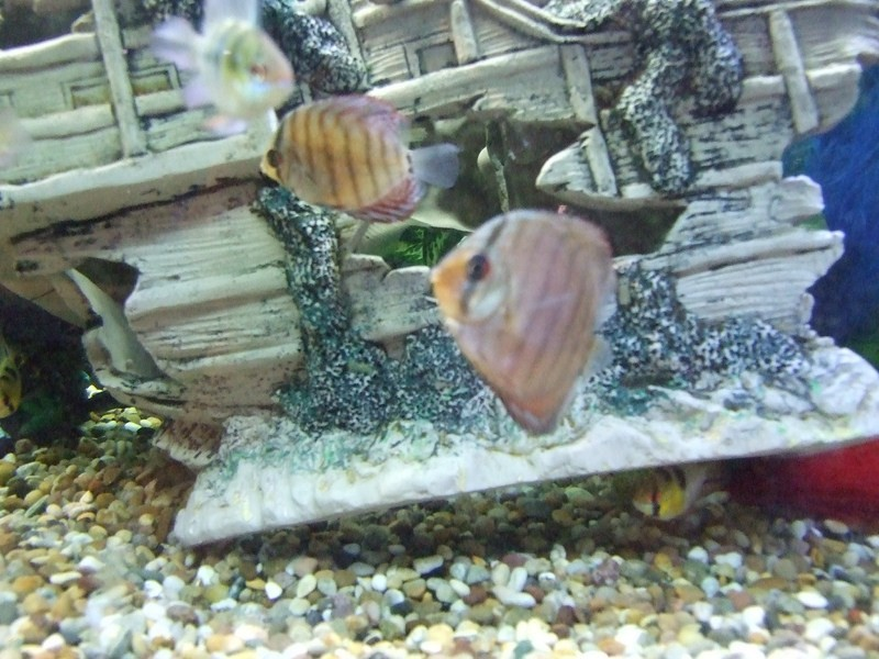 fish055