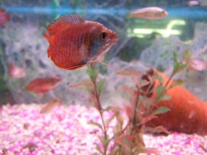 fish057