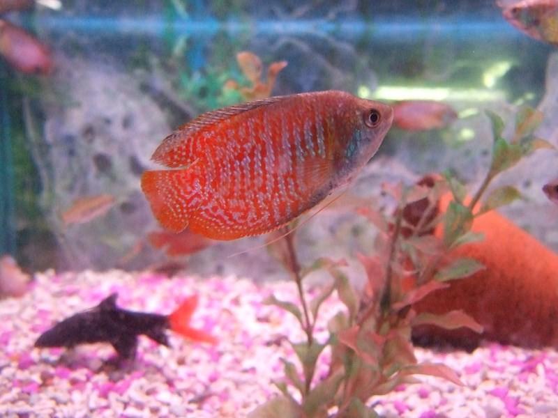 fish058