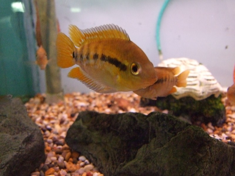 fish059