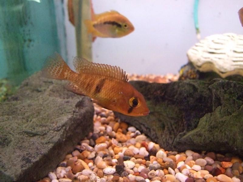 fish060