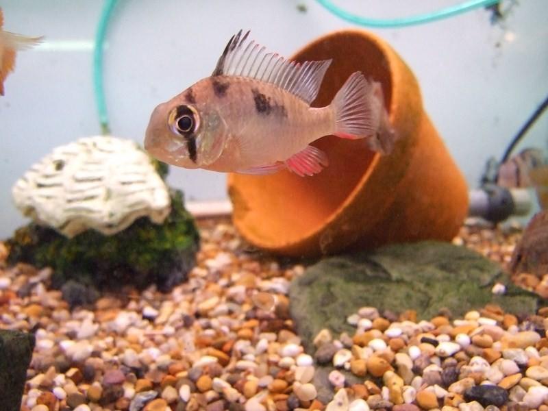 fish061