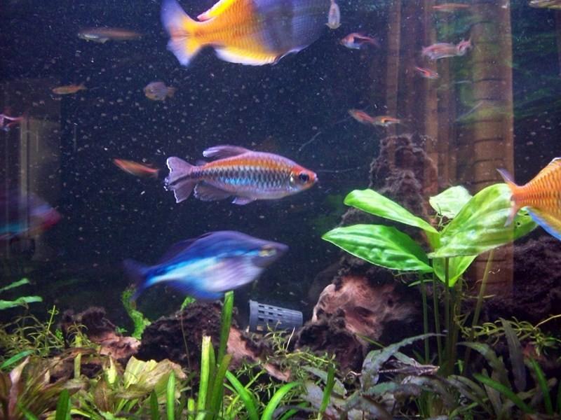 fish065