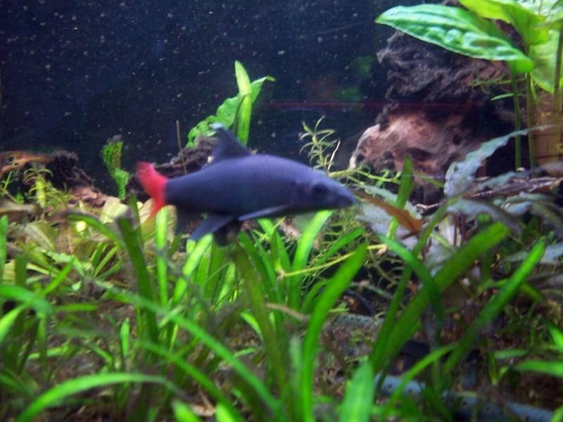 fish067