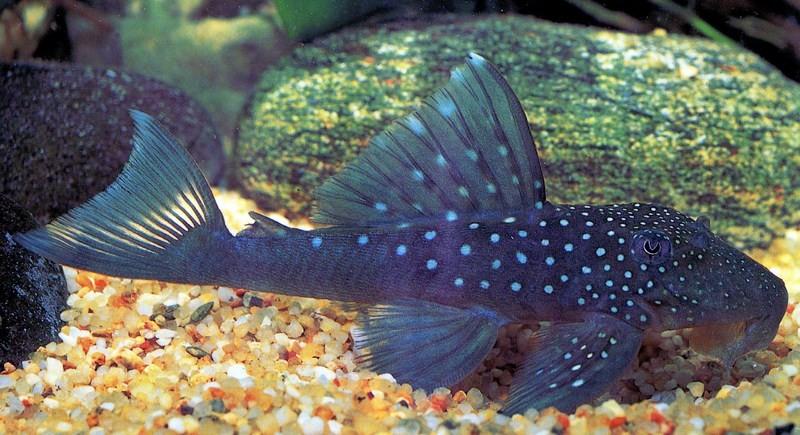 fish069