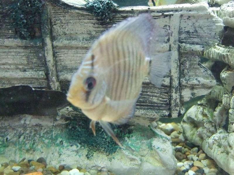 fish070