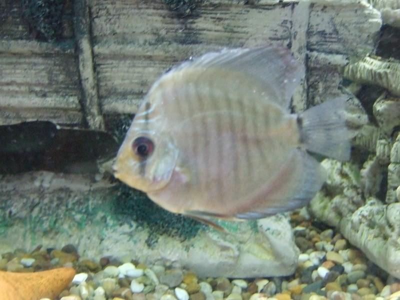 fish071