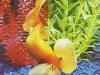 fish001