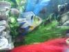 fish006