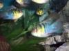fish030