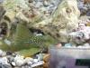 fish032