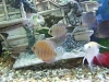 fish037