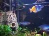 fish066