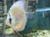 fish072