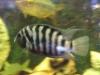 fish073