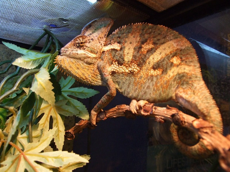 reptiles04