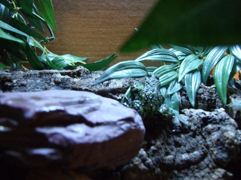 reptiles08