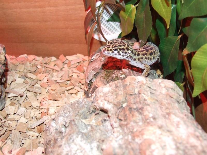 reptiles13