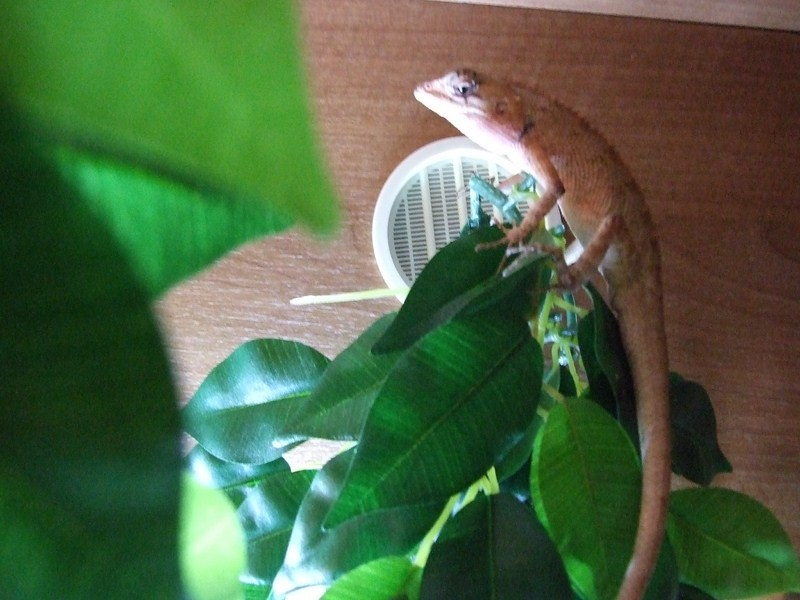 reptiles18