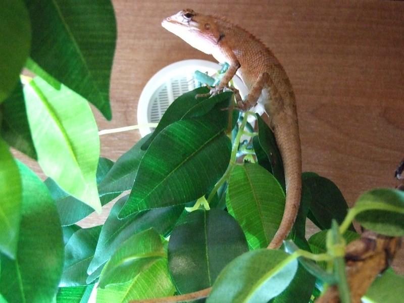 reptiles19