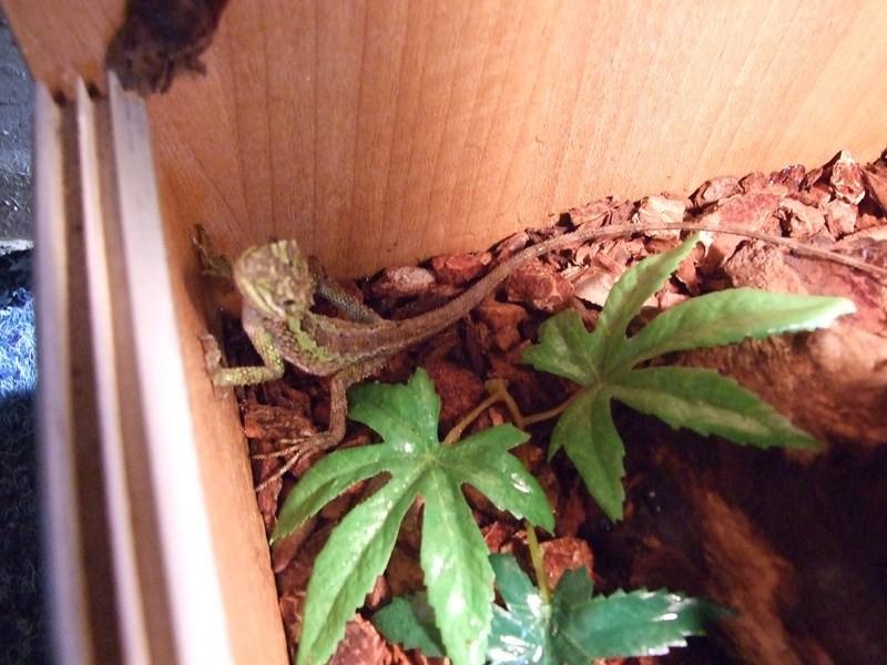 reptiles21