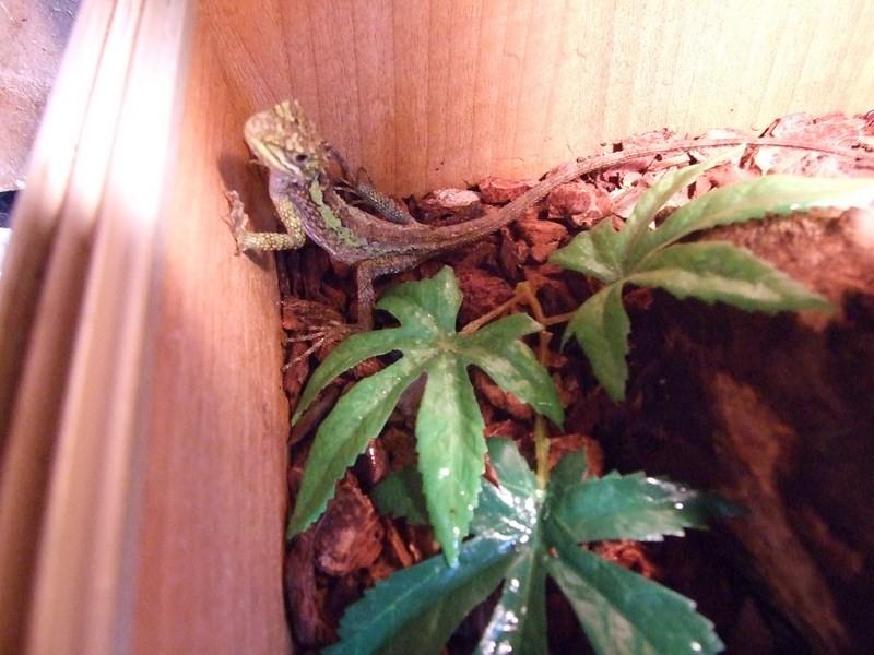 reptiles22
