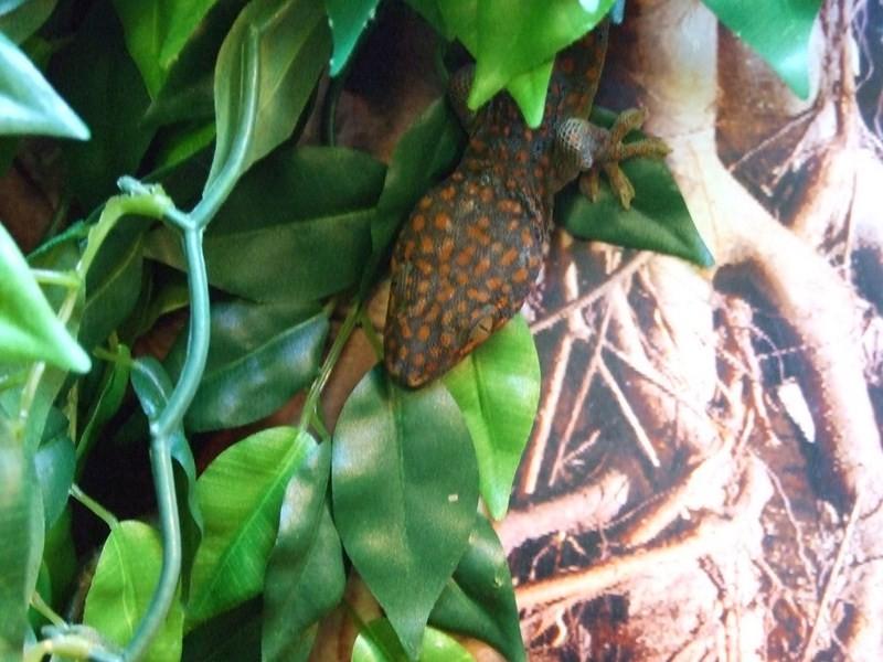 reptiles23