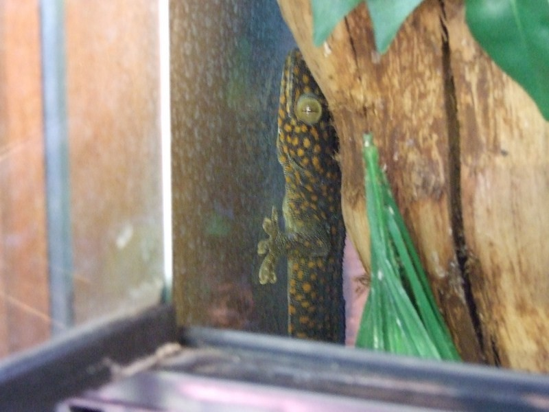 reptiles25