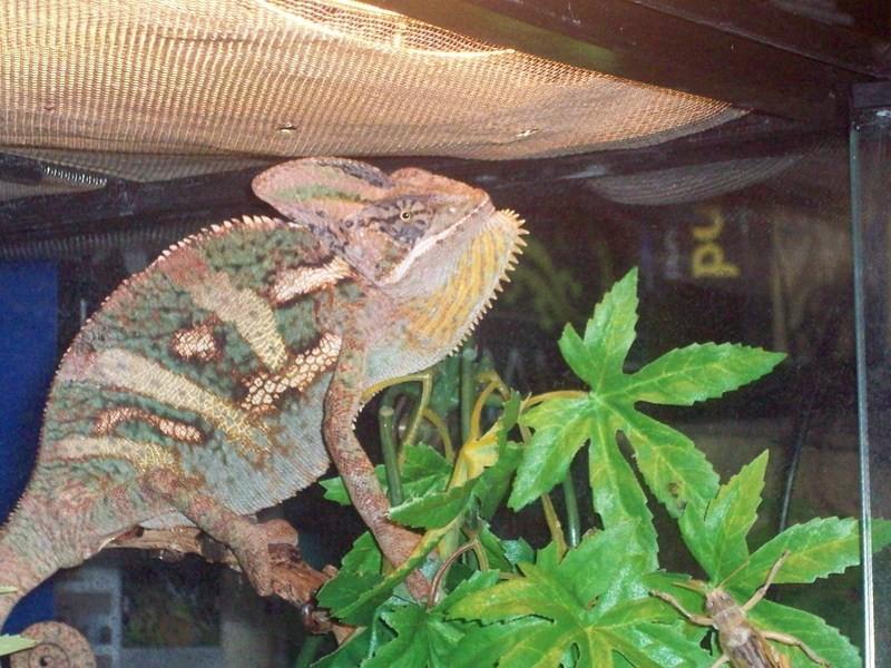 reptiles33