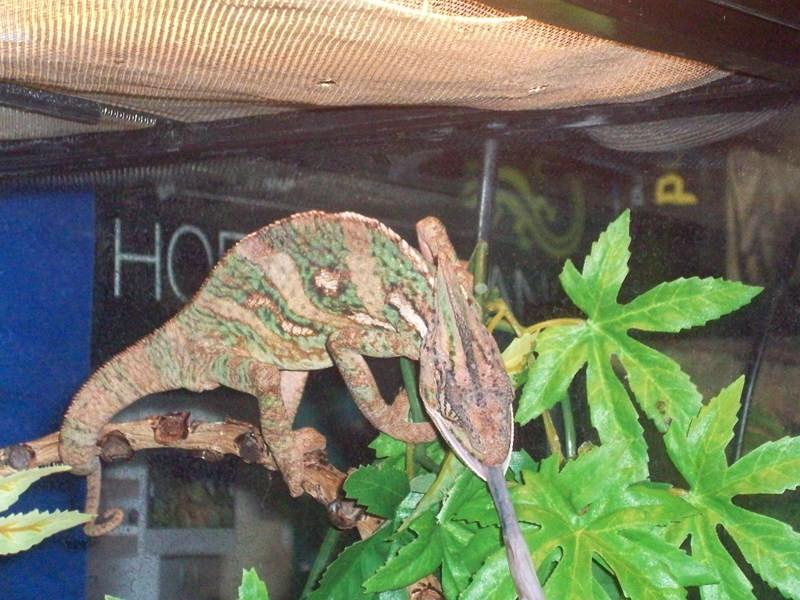 reptiles34