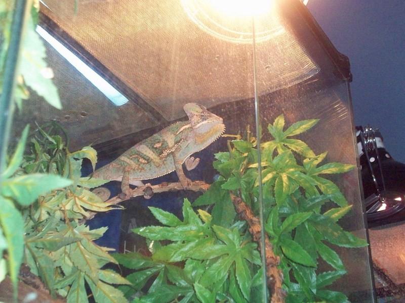 reptiles35