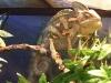 reptiles26