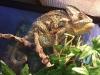 reptiles27