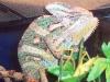 reptiles32