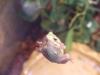 reptiles43