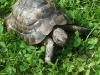 tortoise01