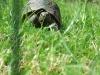 tortoise02