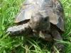 tortoise06
