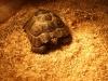 tortoise08